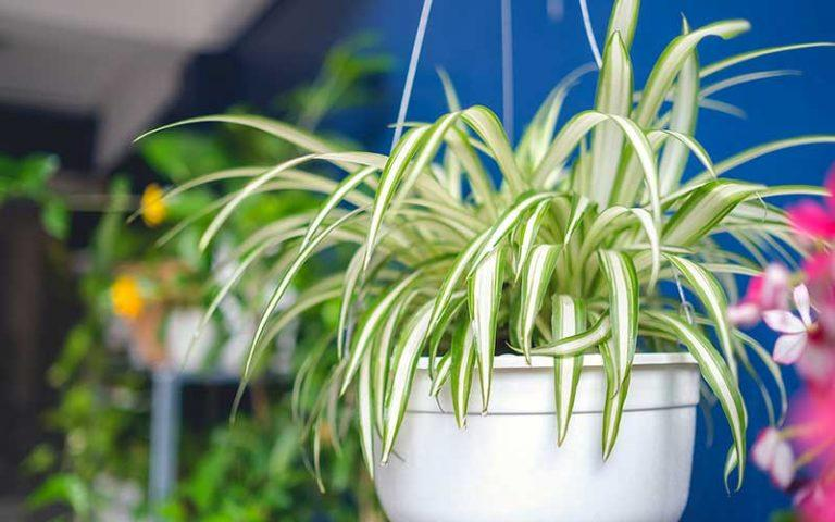 Air-purifying Houseplants to Improve Indoor Air Quality